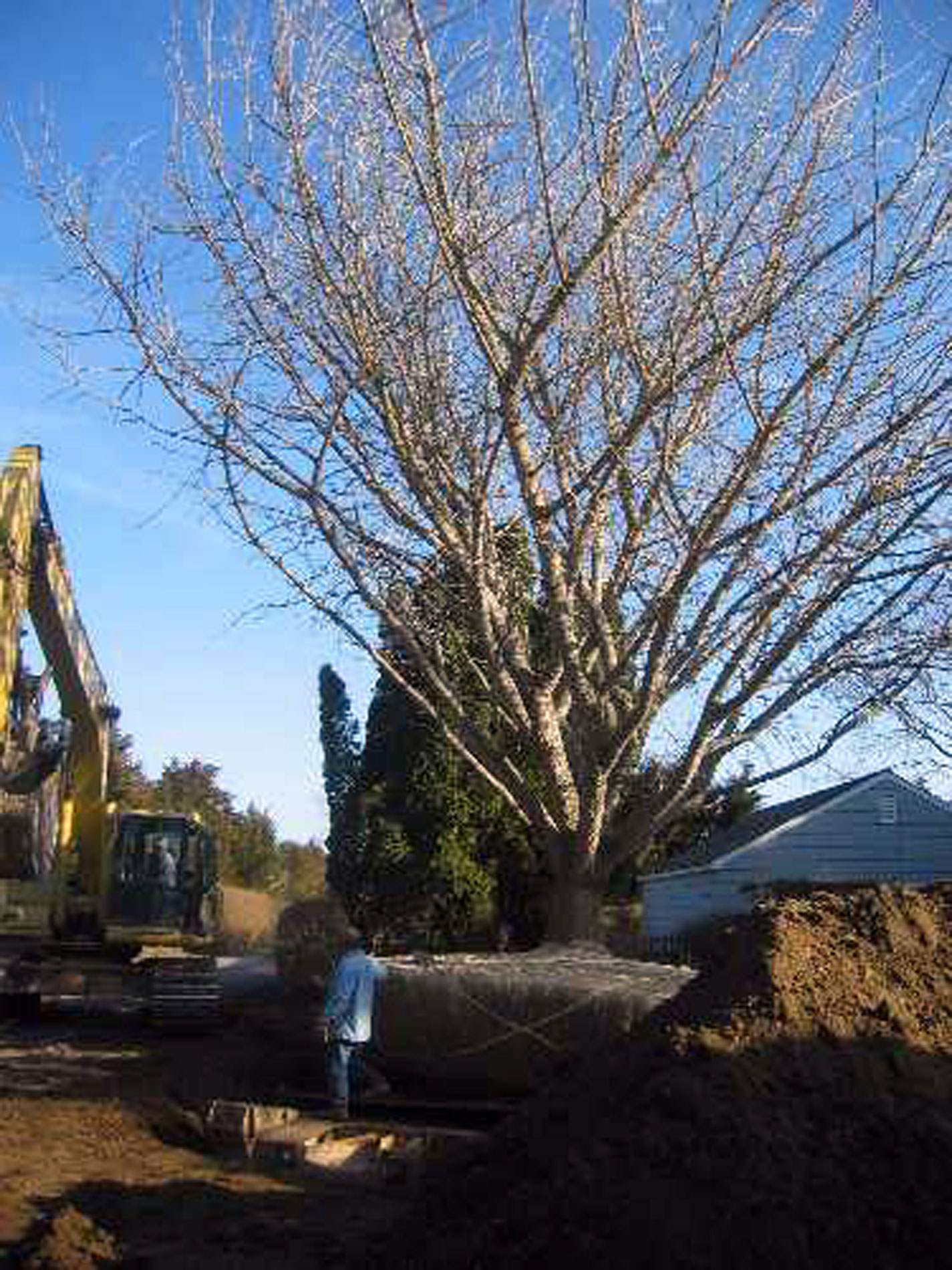 Large Tree Moving, East Hampton, New York