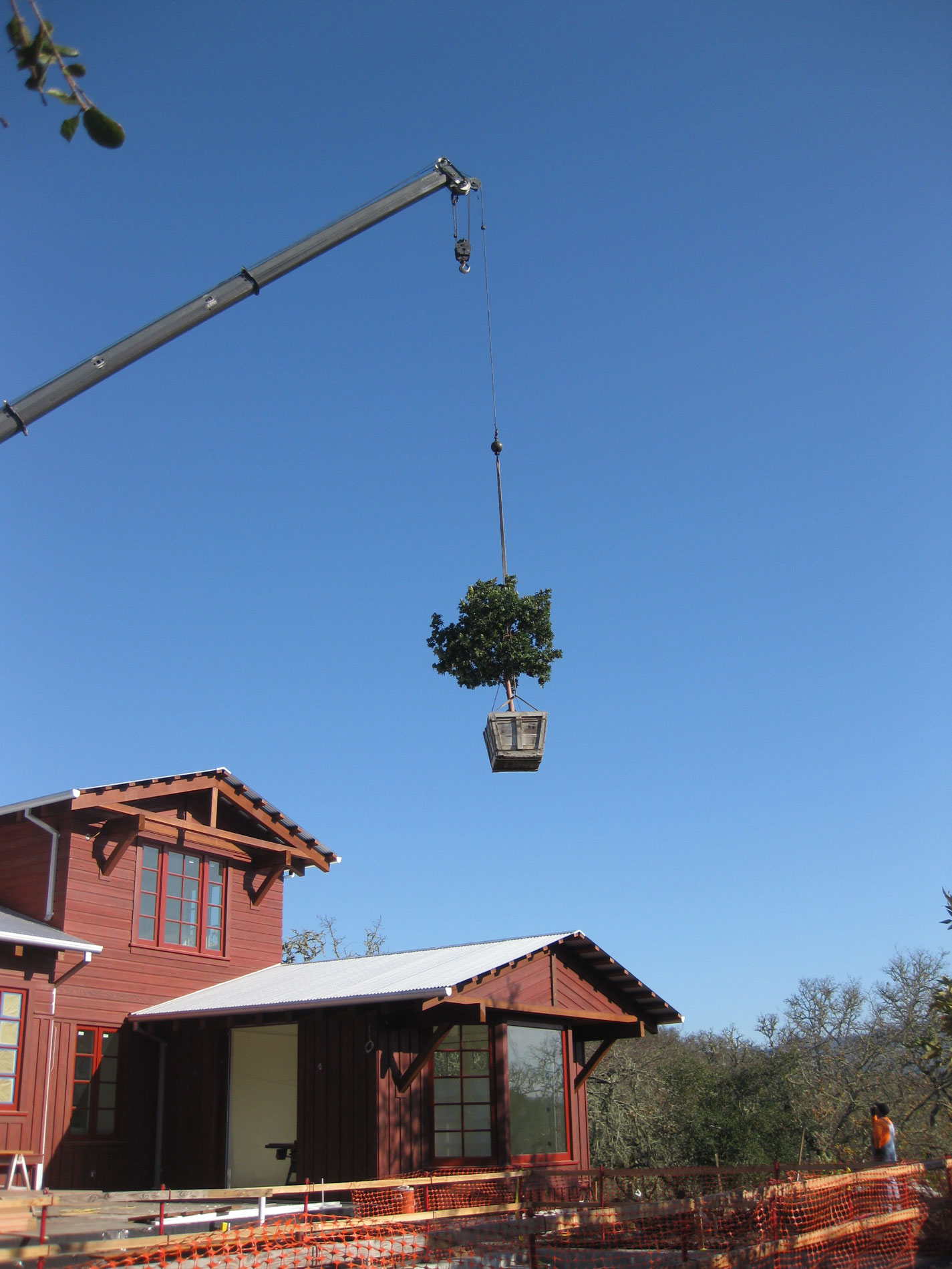 Because access to the site was limited once the new house was constructed, large trees had to be craned into the back gardens.
