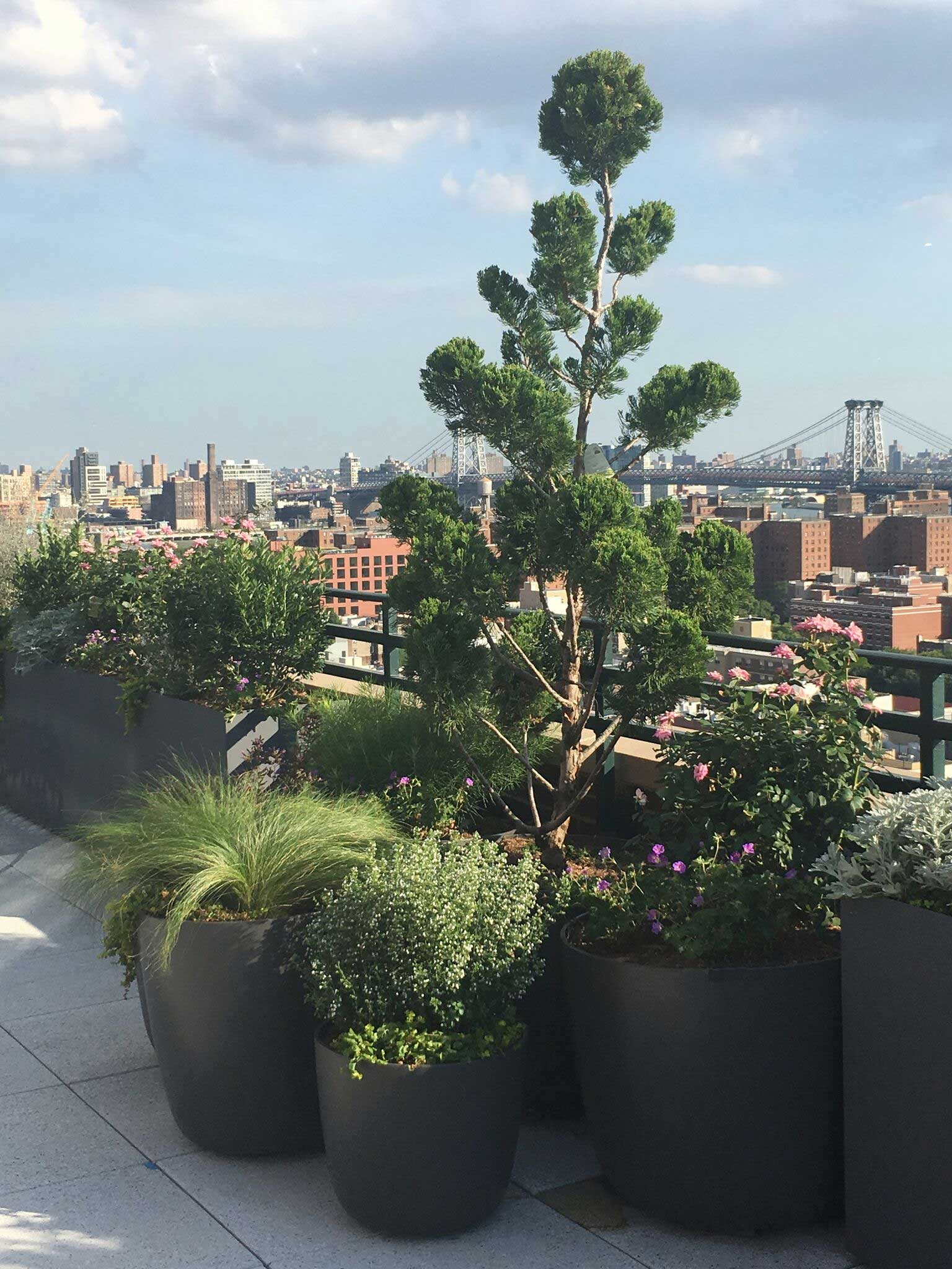 Roof Terrace Garden, New York, New York