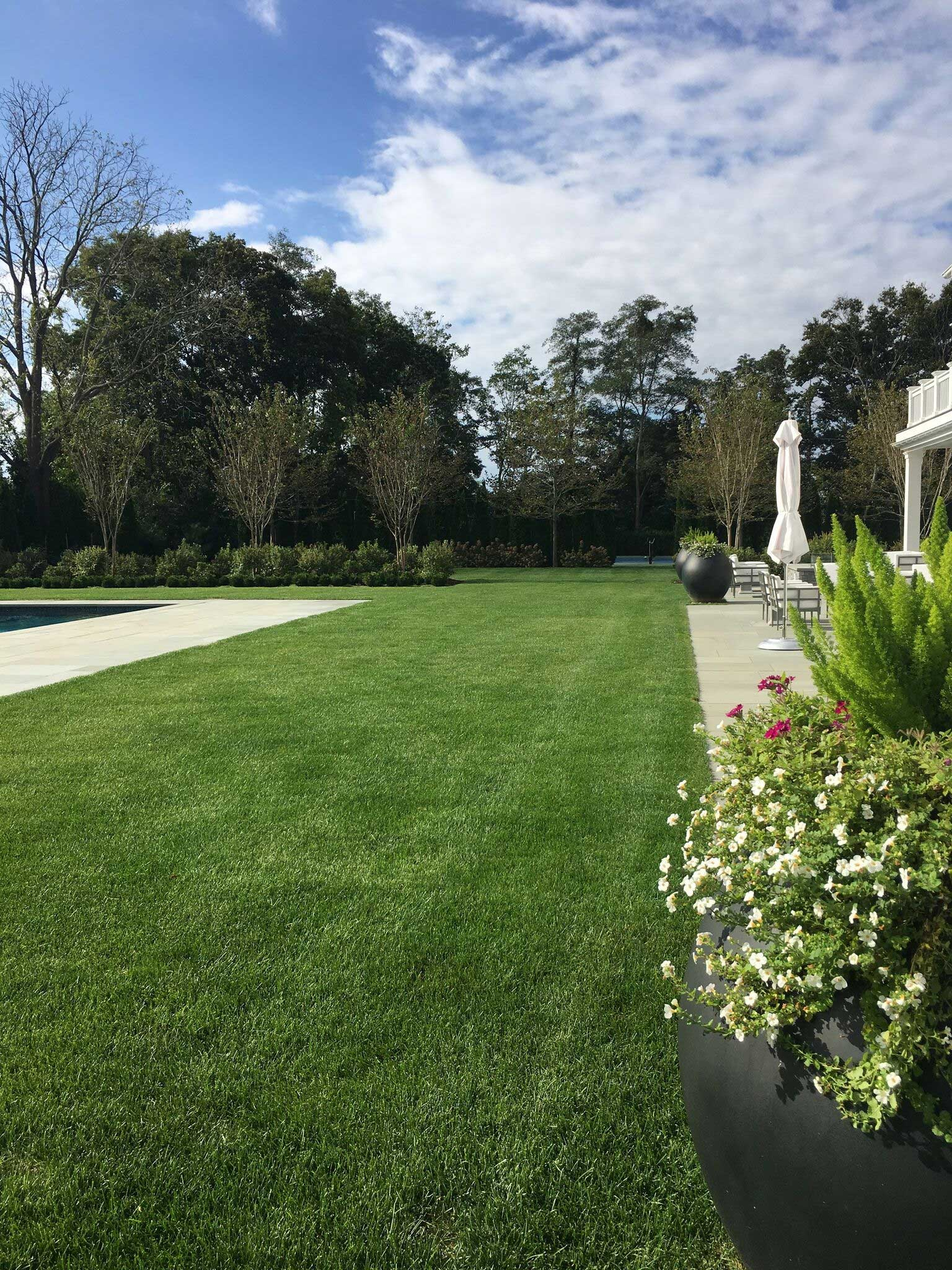 A lawn separates the back terrace of the house from the swimming pool. The edge of the Pool Terrace is defined by rows of Sarah's Favorite Crapemyrtle underplanted with Summersweet and Boxwood hedges.